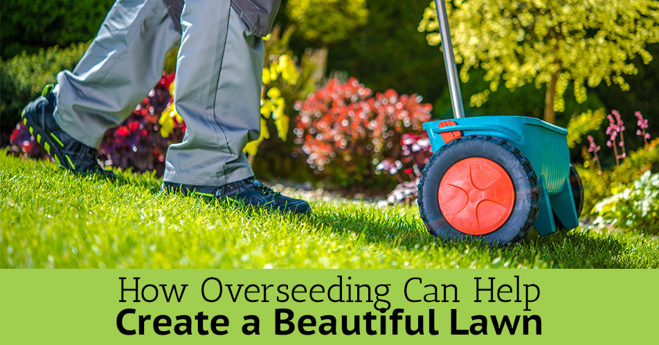 Best Lawn Care Company Central Ohio Lewis Center
